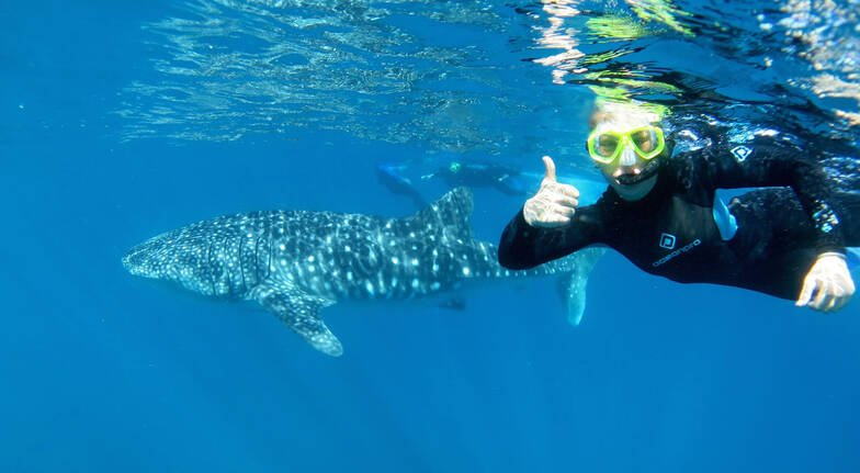woman swimming next to whale shark