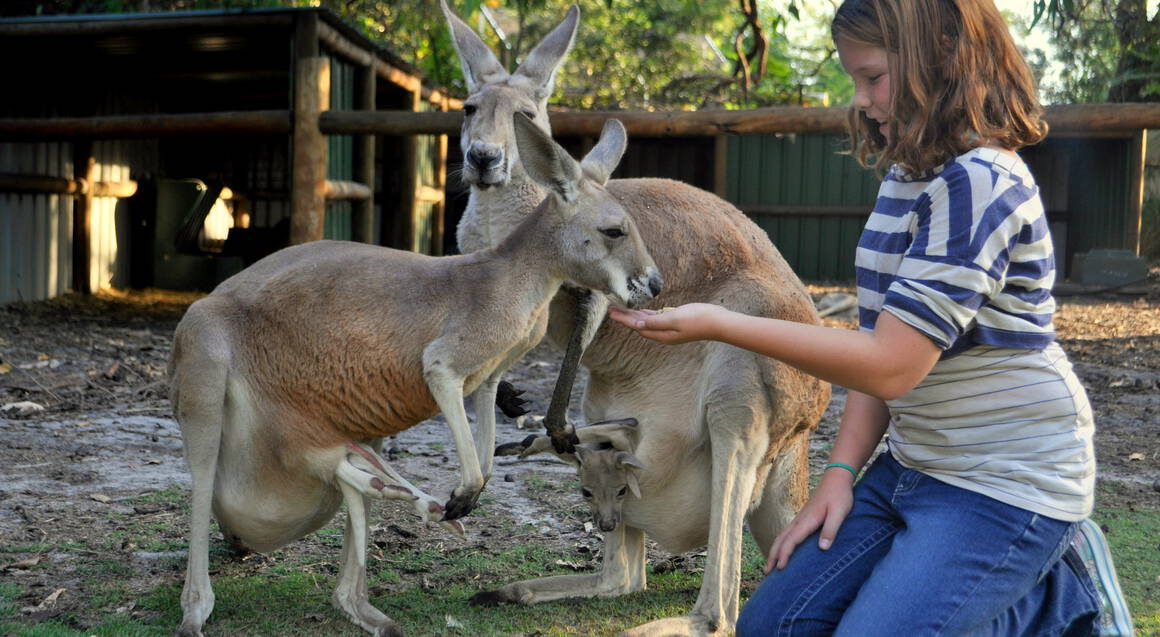 Ultimate Aussie Wildlife Tour with Lunch