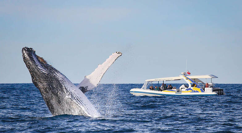 High Speed Whale Watching Adventure Cruise - 2 Hours