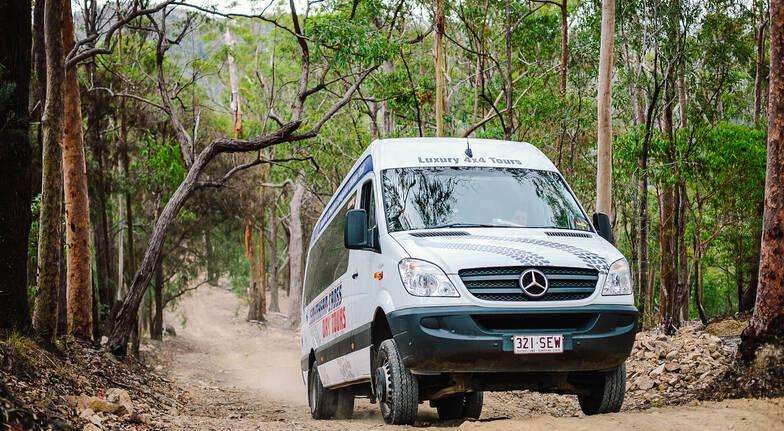 Gold Coast Rainforest and Wildlife Tour- Adult