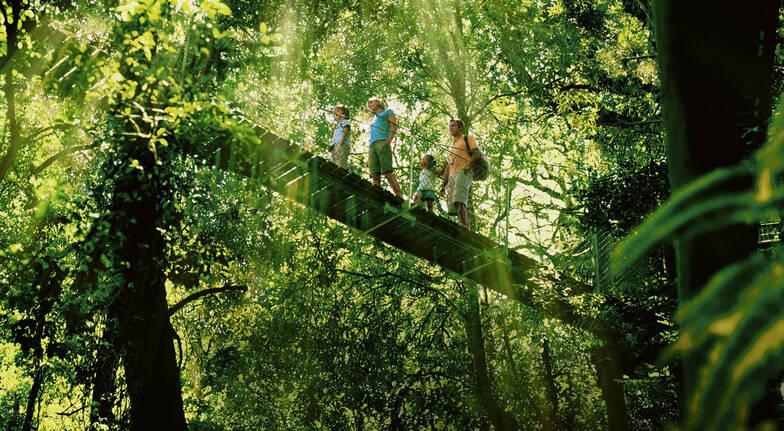 Gold Coast Rainforest and Wildlife Tour - Child