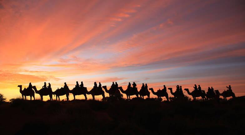 Sunrise Camel Ride  60 Minutes