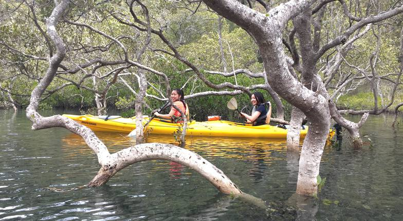 Paddlecraft women kayaking through mangroves pittwater sydney