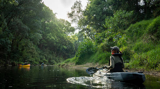 Byron Bay Rainforest Kayak and Platypus Tour - 3 Hours