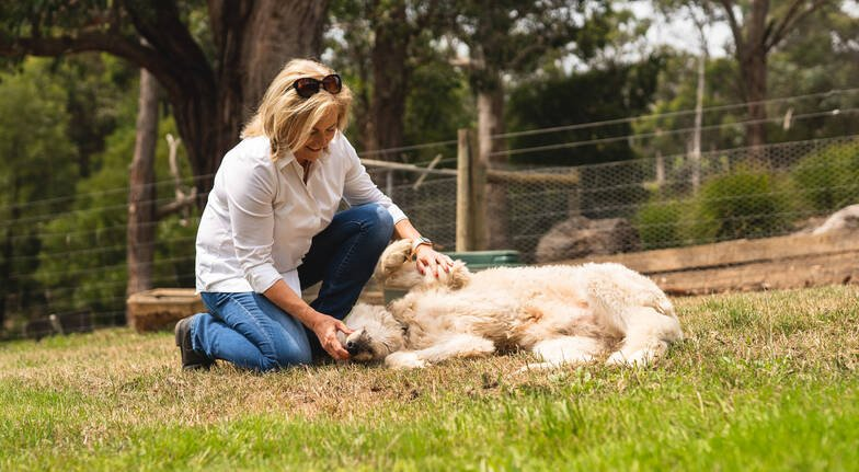Sustainable Farmyard Tour with Farmer's Lunch and Wine