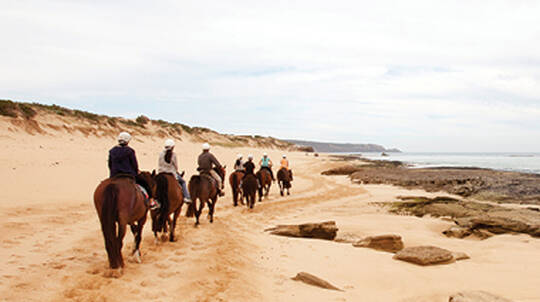 Twilight Beach and Bush Horse Ride