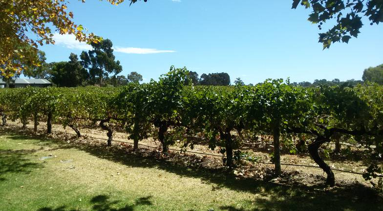 Margaret River Private Winery Tour - For 2