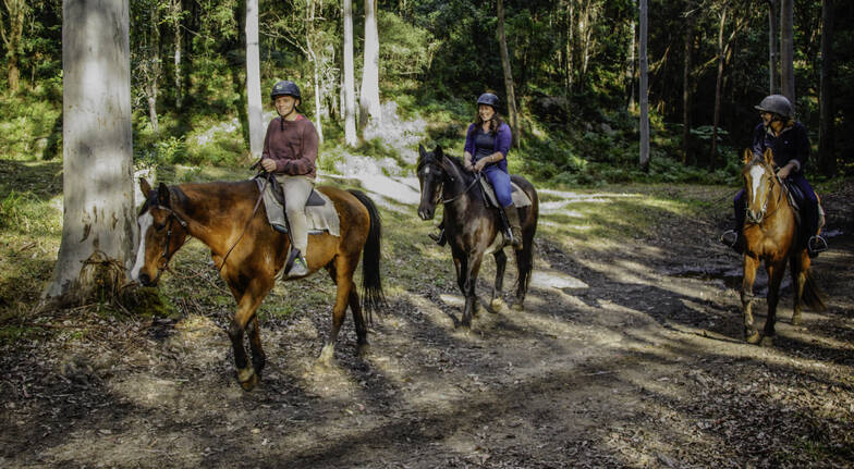 Horse Riding Adventure and Overnight Camping