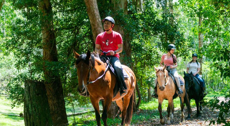 Horse Riding Free Range - 2 Hours