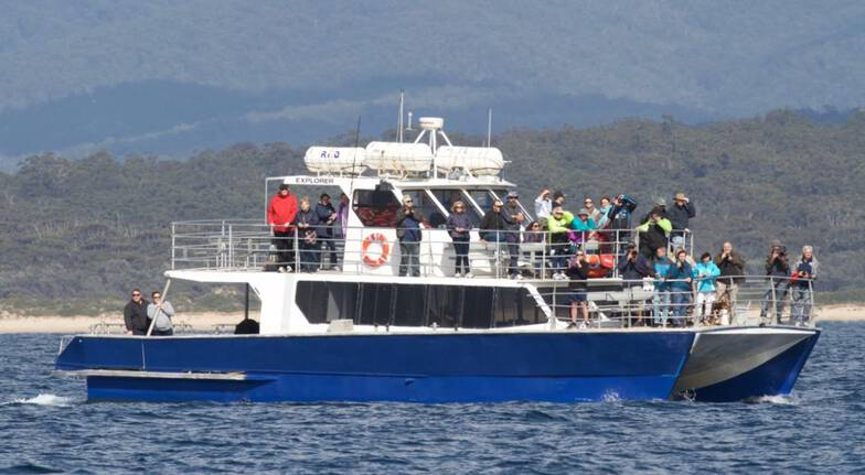 Sydney Weekend Whale Watching Cruise