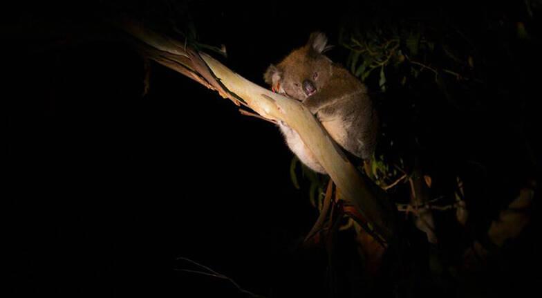 Hanson Bay Wildlife Sanctuary Sunset Nocturnal Tour