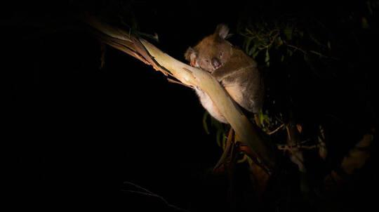 Sunset Nocturnal Tour at Hanson Bay Wildlife Sanctuary