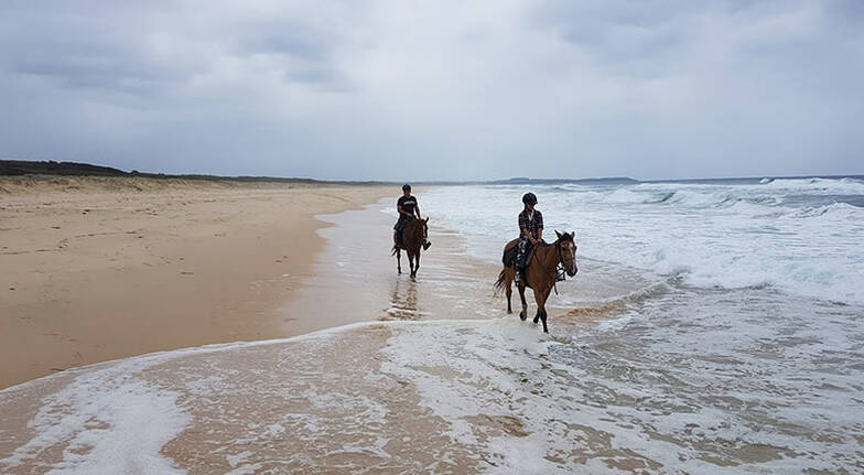 Half Day Beach Horse Ride with Cheese Platter and Wine