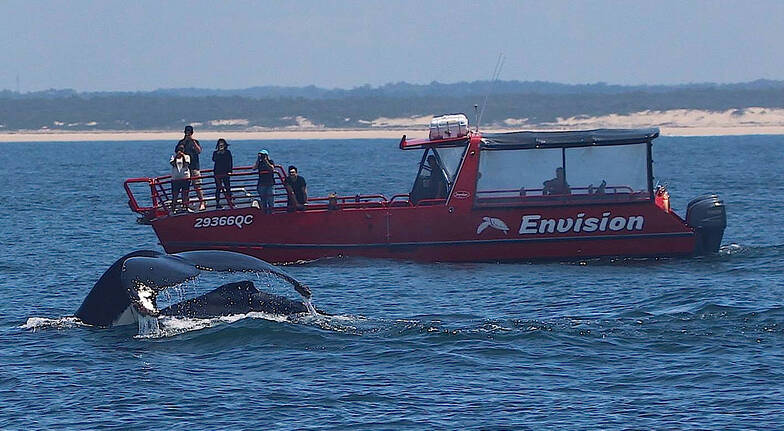 Whale Watching Express Cruise - 90 Minutes