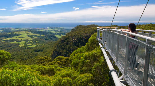 Illawarra Fly Self-Guided Treetop Walk