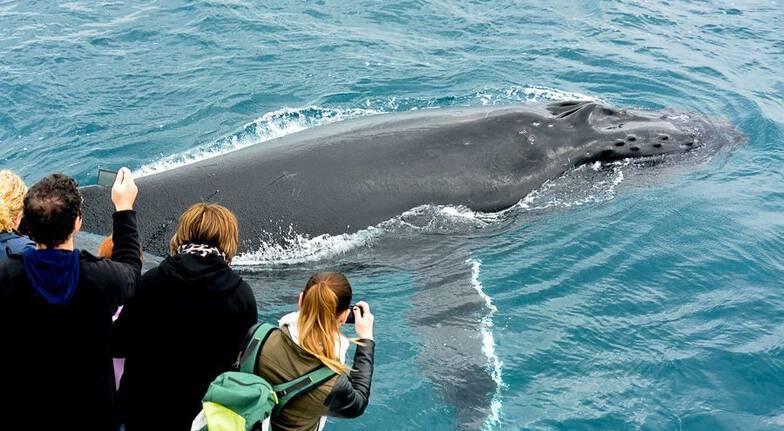 Whale Watching Cruise - Augusta, WA
