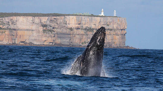 Jervis Bay Whale Watching Cruise - 2 Hours