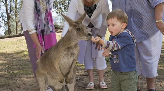 River Cruise and Koala Sanctuary Tour