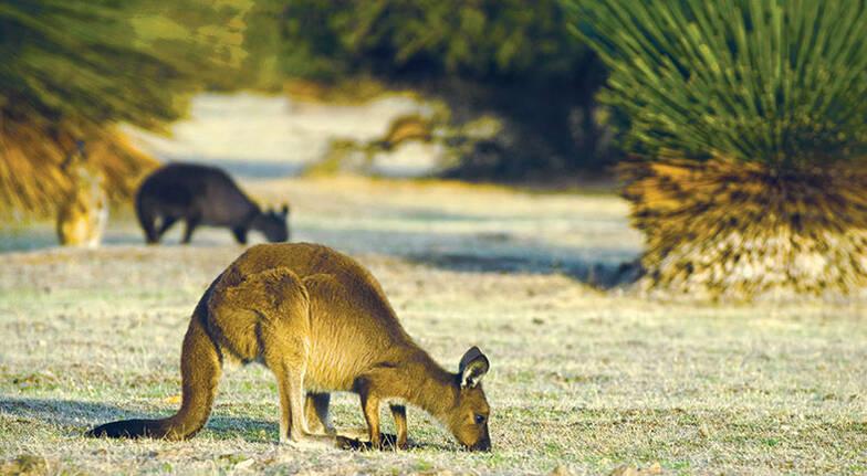1 Night Kangaroo Island Road to Recovery Getaway - For 2