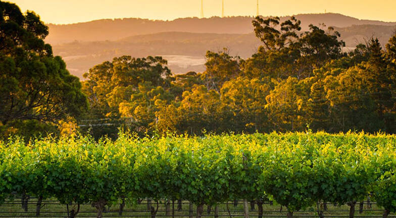 Golf, Picnic and Wine Tasting at The Lane Vineyard - For 8