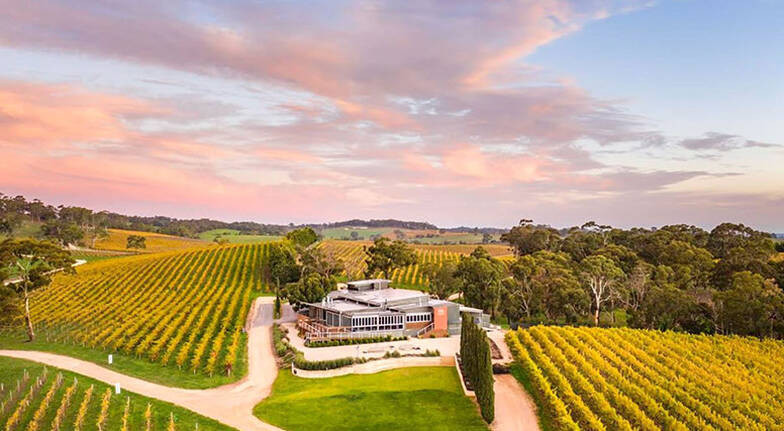 Private Gourmet Picnic and Wine at The Lane Vineyard - For 8
