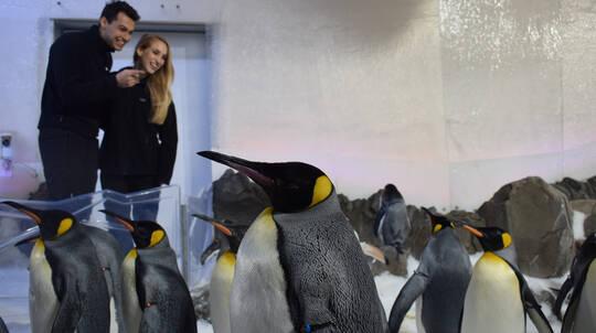Penguin Encounter at SEA LIFE Melbourne Aquarium