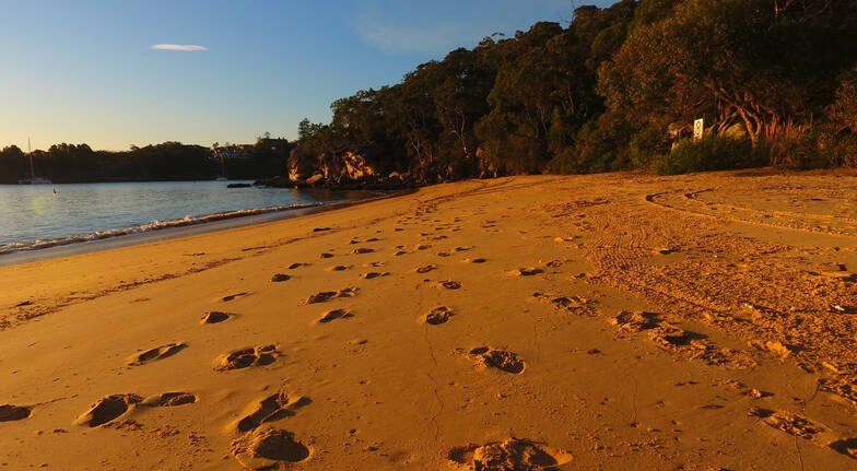 Seafood Beach Picnic with Kayaking in Manly - For 2