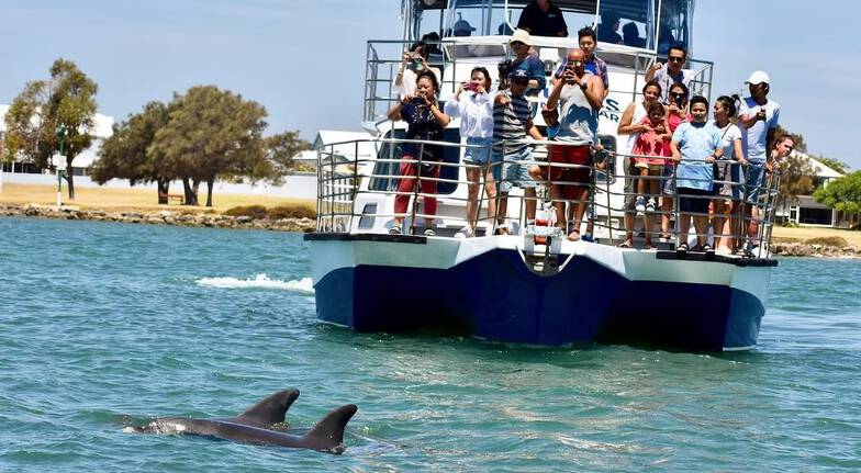 Dolphin and Scenic Marine Cruise