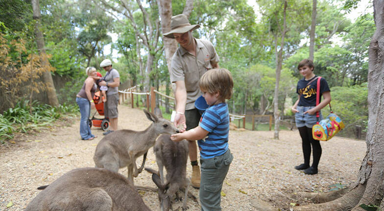 Macadamia Castle Family Pass with Private Animal Experiences
