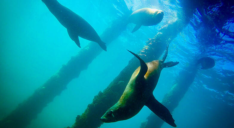 Cruise and Snorkel with Seals - 2 Hours