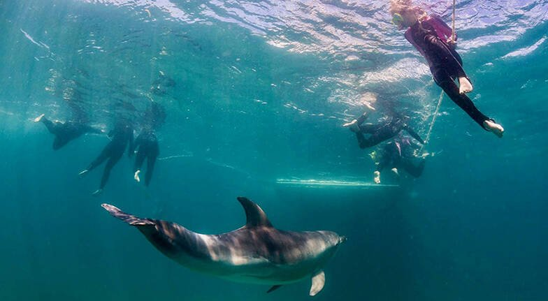 Swim with Dolphins and Seals  3 Hours