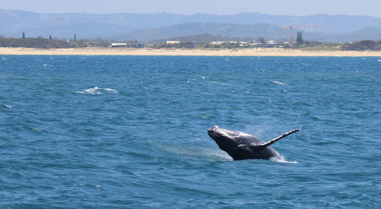 Whale Watching Jet Boat Ride - 90 Minutes