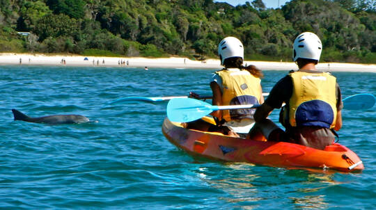 Kayak with Dolphins Guided Tour - 3 Hours