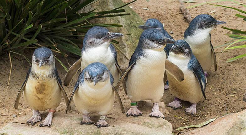 Full Day Phillip Island Wildlife and Brighton Beach Tour