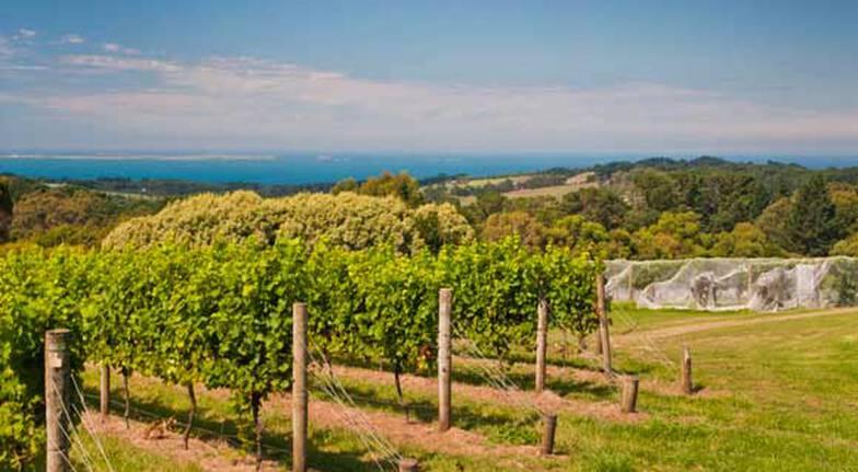 Mornington Peninsula Private Wine Tour - Melbourne Pickup