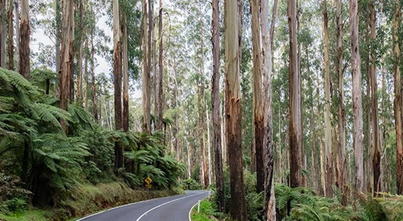 Yarra Valley Motorcycle Ride - 3 Hours