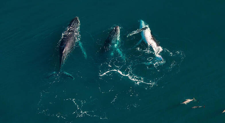 Ningaloo Reef Private Sunset Flight  60 Minutes  For 3
