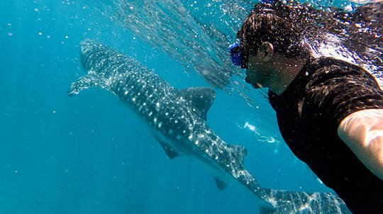 Swim with Whale Sharks Cruise with Lunch