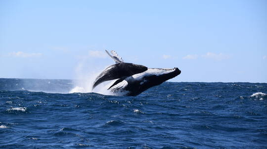 Whale Watching and Speed Boat Thrill - 2 Hours