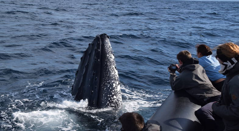 Whale Watching and Speed Boat Thrill - Up To 21 People