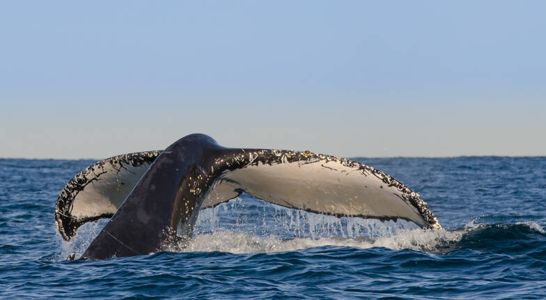 Luxe Whale Watching Cruise with BBQ Lunch - 4 Hours