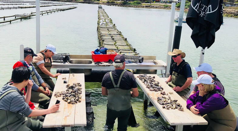 Oyster Farm Tour with 36 Oysters and Sparking Wine - For 2