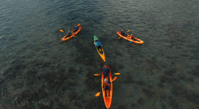 Guided Kayak Tour from Palm Cove to Double Island - Child