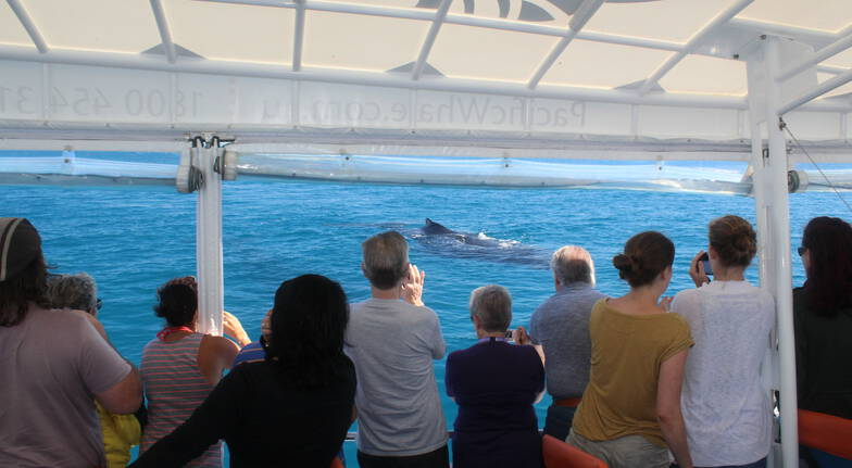 3 Hour Whale Watching Cruise with Snacks and Drinks