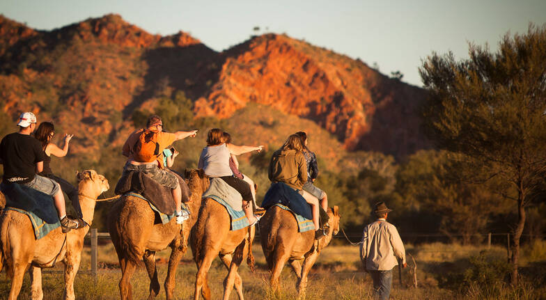 Outback Camel Ride Adventure northern territory
