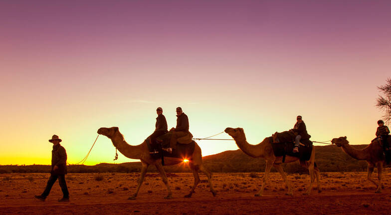 Outback Sunset Camel Ride northern territory