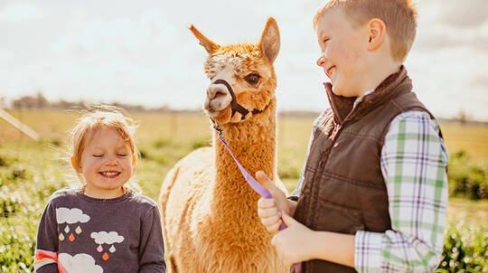 Alpaca Meet and Greet Experience