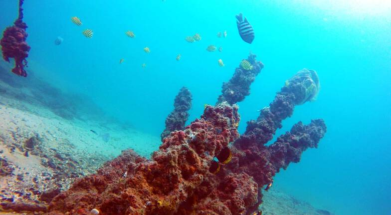 Introductory Scuba Dive with Snorkeling