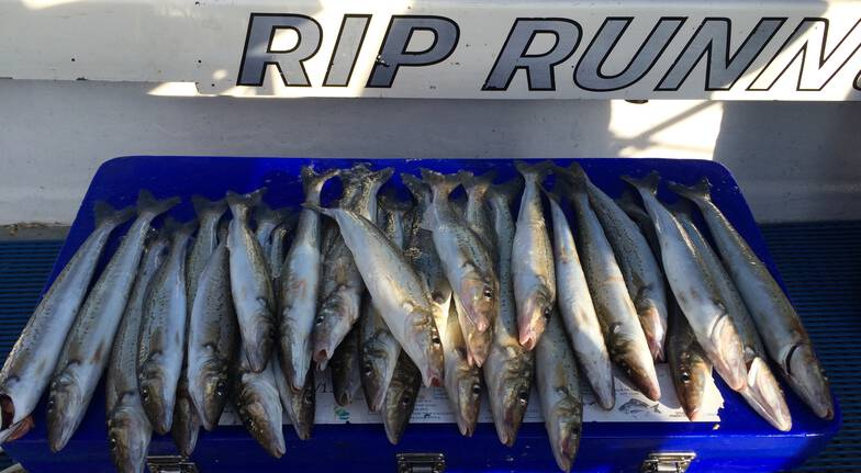 fishing trip sport piles of fish in blue container