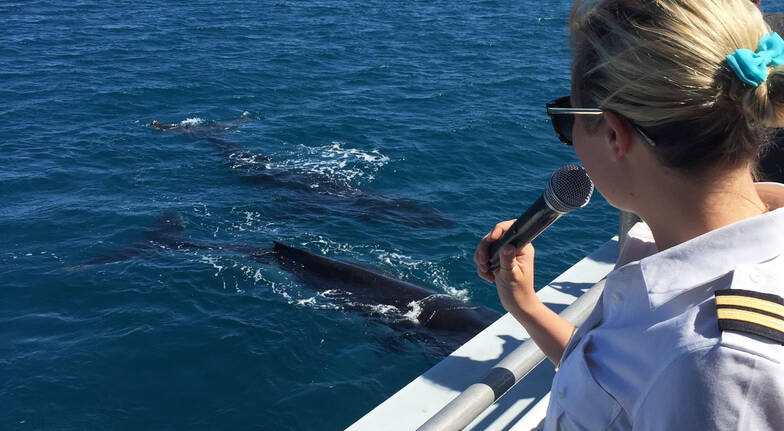 2 Hour Whale Watching Tour - Weekday- Hillary's Boat Harbour